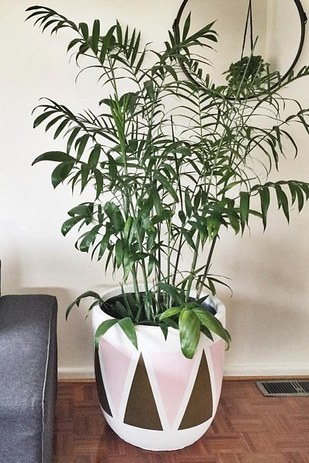 Bamboo plants make great houseplants and they can actually purify the air in your home!