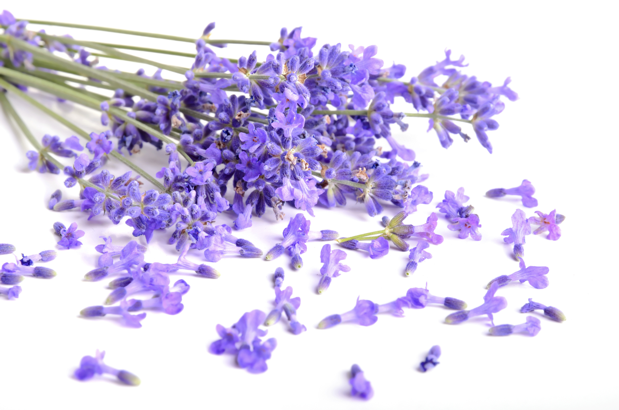 Lavender is a great scent for your bedroom as it can help you relax and sleep more easily.