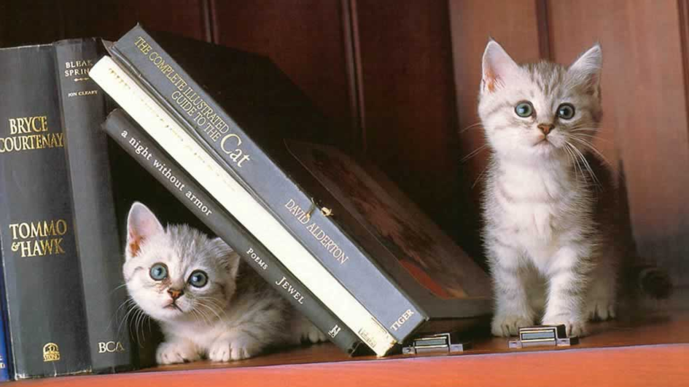 Make room for your cat to hid in your bookshelves.