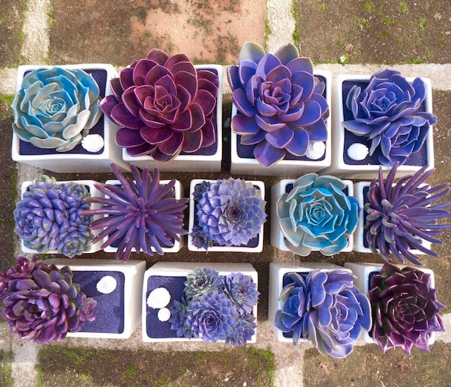 spray paint succulents to make them look otherworldly